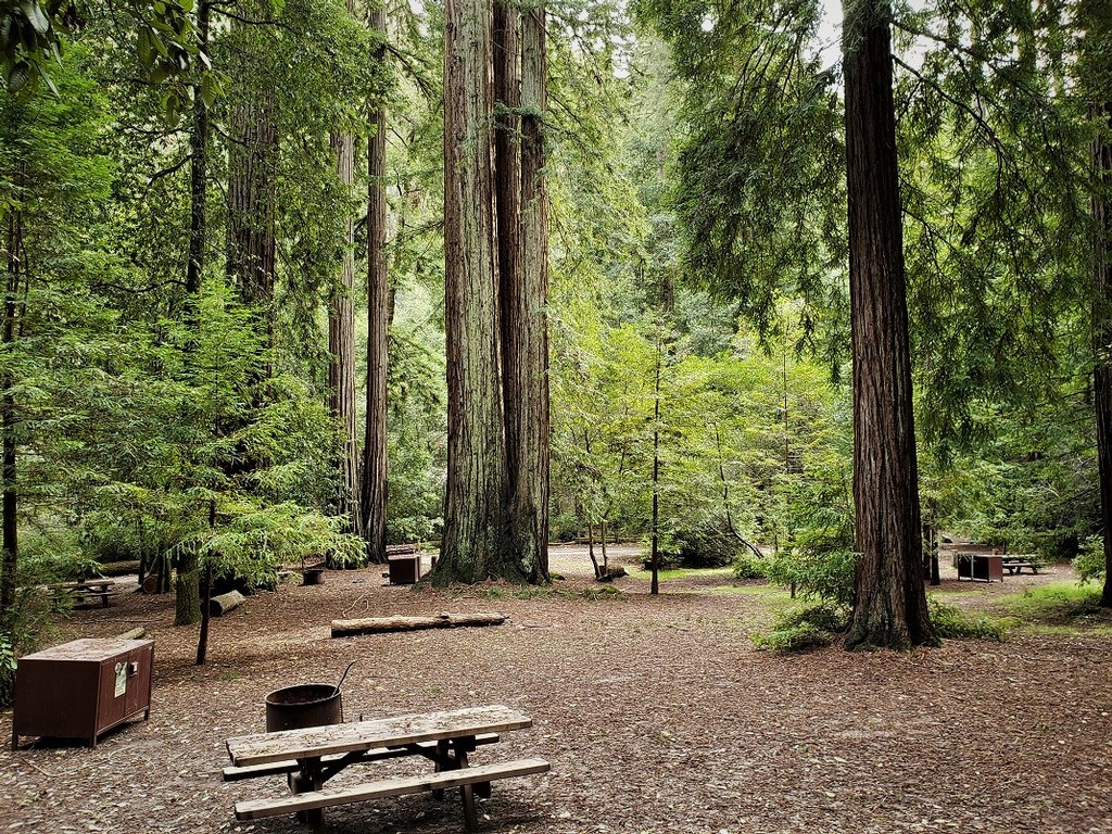 One of the Best Campgrounds in Big Basin Redwoods State Park