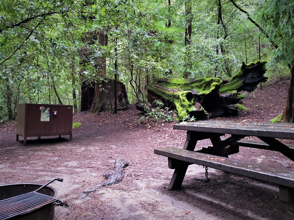 Huckleberry Campground Review - Big Basin Redwoods State Park